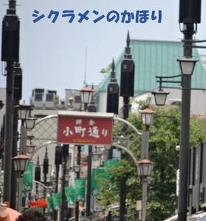kamakurakomatidori0715.png