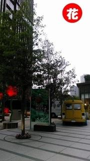 nagatatyo.jpg